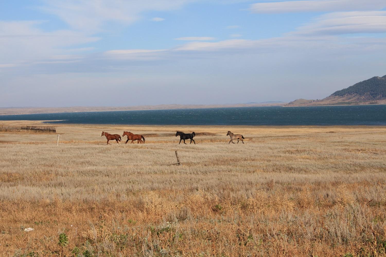 Казахстан лошади на природе